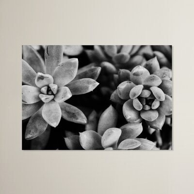 Beckett Succulents Photographic Print Size: 11