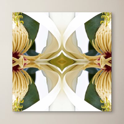 Baroque Magnolia 2 by Rose Anne Colavito Graphic Art Size: 10