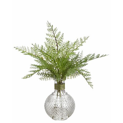 Varick Gallery Lace Fern Desk Top Plant in Glass Vase