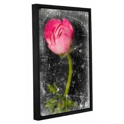 'Ranunculus Pink' by Sia Aryai Framed Graphic Art Size: 12