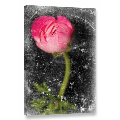 'Ranunculus Pink' by Sia Aryai Graphic Art on Wrapped Canvas Size: 12