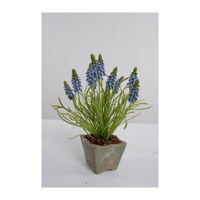 Faux Grape Hyacinth Floral Arrangements in Pot Color: Blue