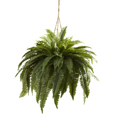 Double Giant Boston Fern Hanging Plant in Basket