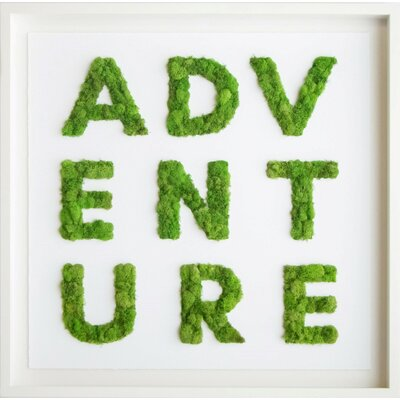 Brayden Studio Adventure Moss Live Art Wall Décor