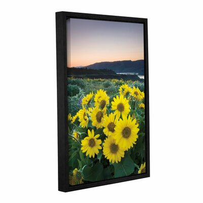 Balsamroot Framed Photographic Print on Wrapped Canvas