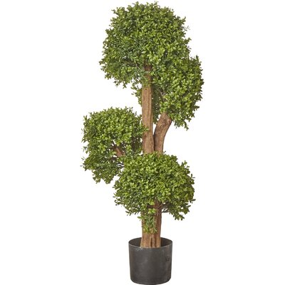Boxwood Tree in Pot