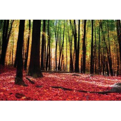 Autumn Forest Photographic Print