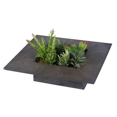 Assorted Succulents Wall Arrangement Foliage Plant in Planter