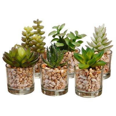 6 Piece Succulent Plant in Decorative Vase