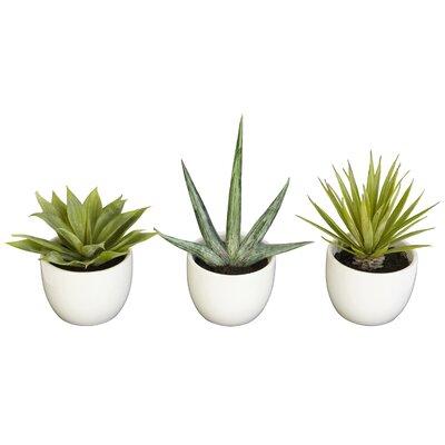 3 Piece Southwest Desk Top Plant in Pot