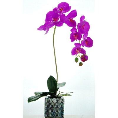 Orchid Floral Arrangement in Ceramic Pot Flower color: Purple
