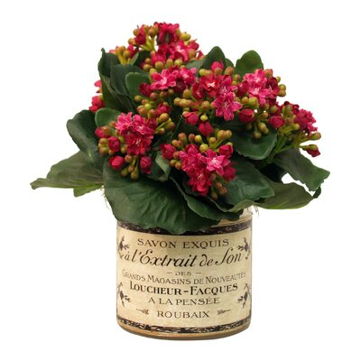 Faux Kalanchoe in French Labeled Pot