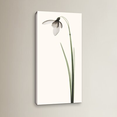 Snowdrop I Graphic Art on Wrapped Canvas