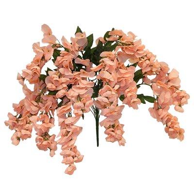 Wisteria Bush Flower Color: Peach