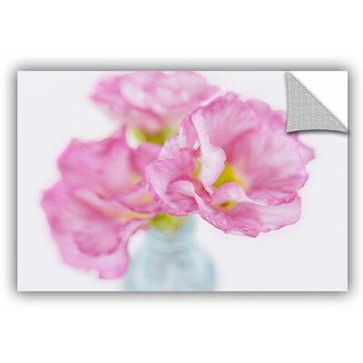 Pink Primroses Photographic Print Size: 12