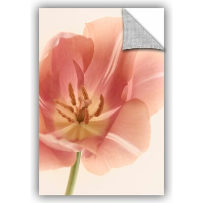 Translucent Tulip Photographic Print