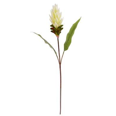 Ginger Flower Stem (Set of 6)