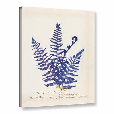 Botanical Fern IV Blue Graphic Art on Wrapped Canvas Size: 10
