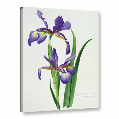 Iris Monspur Graphic Art on Wrapped Canvas