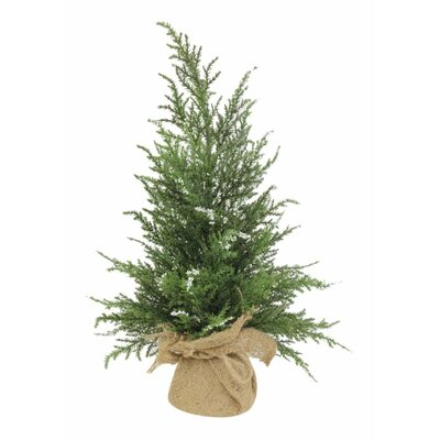 Lark Manor Mini Cedar Tree in Burlap (Set of 6)