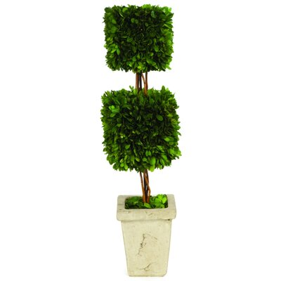 Boxwood Double Square Topiary in Planter