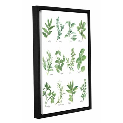 'Herb Chart' by Chris Paschke Framed Graphic Art in White/Green
