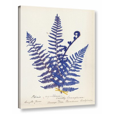 'Botanical Fern IV' by Wild Apple Graphic Art on Wrapped Canvas