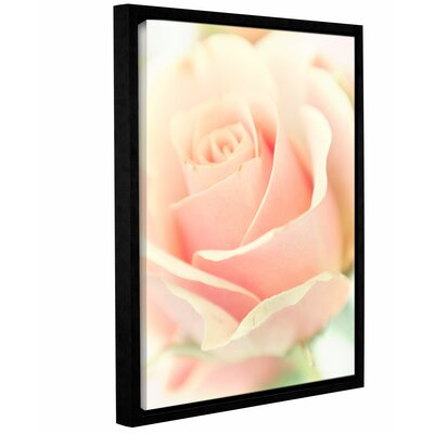 Apricot Rose Framed Photographic Print Size: 10
