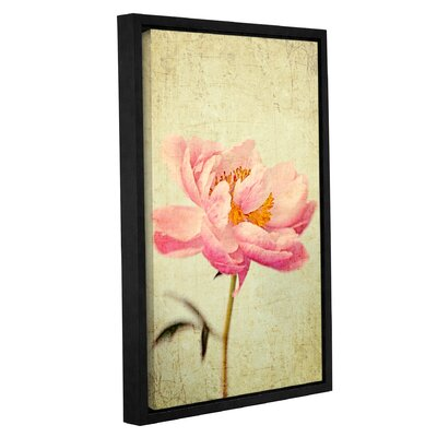 Coral Peony 1 Framed Graphic Art Size: 12