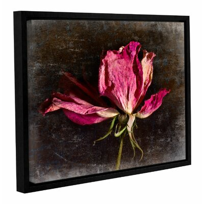 'Red Rose' by Sia Aryai Framed Photographic Print