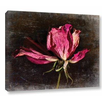 'Red Rose' by Sia Aryai Photographic Print on Wrapped Canvas