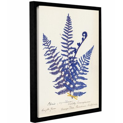 'Botanical Fern IV' by Wild Apple Framed Graphic Art