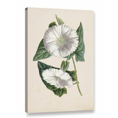 'Bindweed Chromolitho' Print on Wrapped Canvas Size: 12