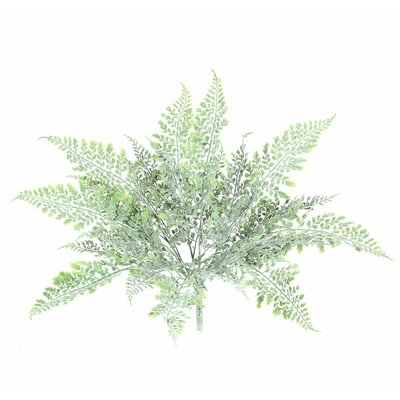 Green Frosted Fern Bush Foliage Plant