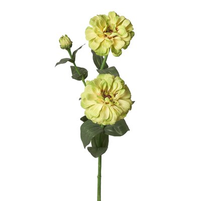 Double Bud Zinnia Stem (Set of 12) Flower Color: Green