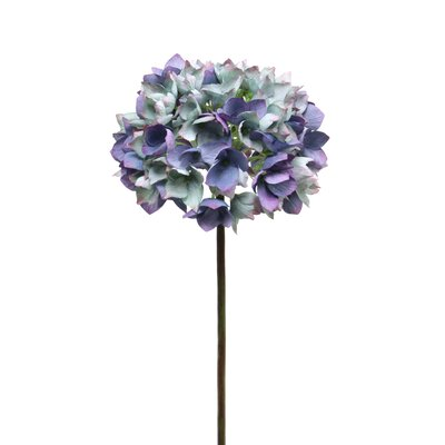 Dry Hydrangea Stem (Set of 6) Flower Color: Blue
