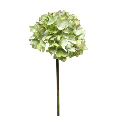 Dry Hydrangea Stem (Set of 6) Flower Color: Sage