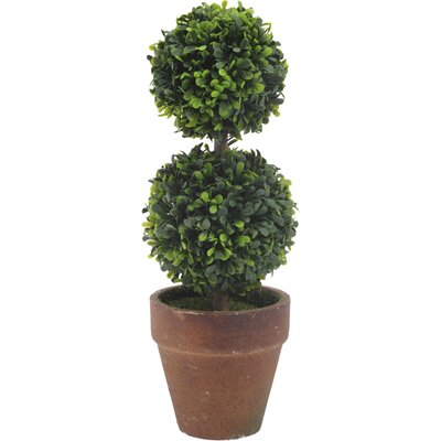 Circular Boxwood Topiary in Pot