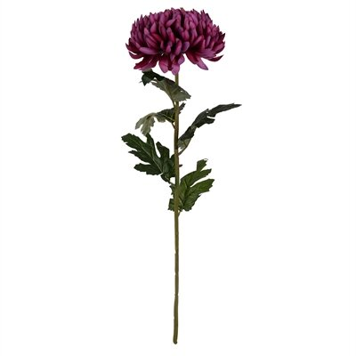 Chrysanthemum Stem Flower Color: Plum