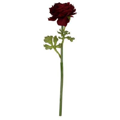Ranunculus Stem