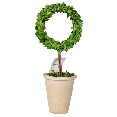 Faux Boxwood Topiary Plant in Planter Size: 18
