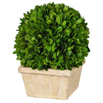 Faux Single Boxwood Topiary in Pot Size: 8.5