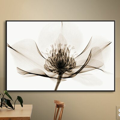 Hellebore I Graphic Art on Wrapped Canvas