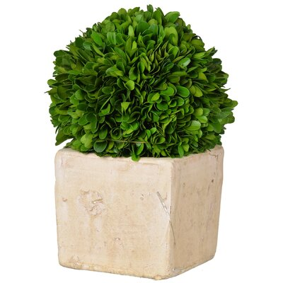 Faux Boxwood Topiary in Pot Size: 10