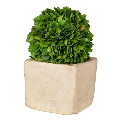 Faux Boxwood Topiary in Pot Size: 12