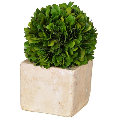 Faux Boxwood Topiary in Pot Size: 9
