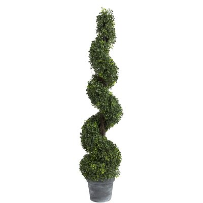 Spiral Boxwood Topiary in Planter Size: 48 H x 10 W x 10 D