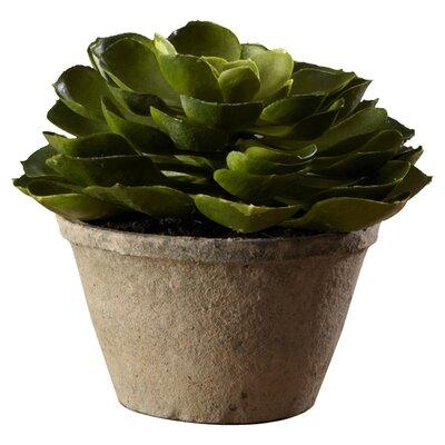 Hildred Echeveria Succulent Desk Top Plant in Pot (Set of 4)