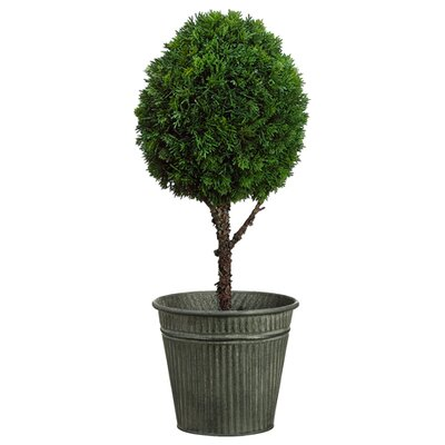 Blackfoot Cedar Ball Topiary in Pot Size: 26 H x 10 W x 10 D