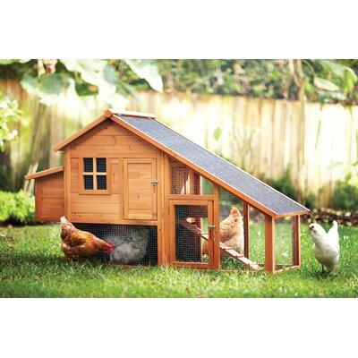 August Grove Philomena Habitat Chicken Coop with Nesting Box